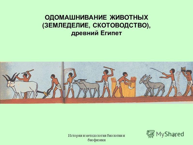 ОДОМАШНИВАНИЕ ЖИВОТНЫХ (ЗЕМЛЕДЕЛИЕ, СКОТОВОДСТВО), древний Египет 31История и методология биологии и биофизики