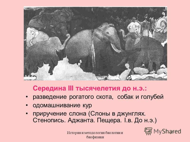 Середина III тысячелетия до н.э.: разведение рогатого скота, собак и голубей одомашнивание кур приручение слона (Слоны в джунглях. Стенопись. Аджанта. Пещера. I.в. До н.э.) 37История и методология биологии и биофизики