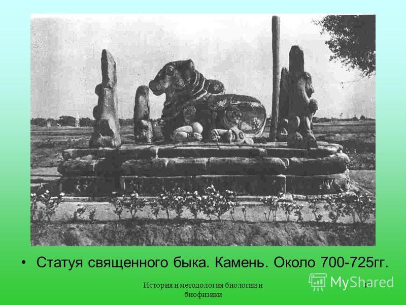 Статуя священного быка. Камень. Около 700-725 гг. 47История и методология биологии и биофизики