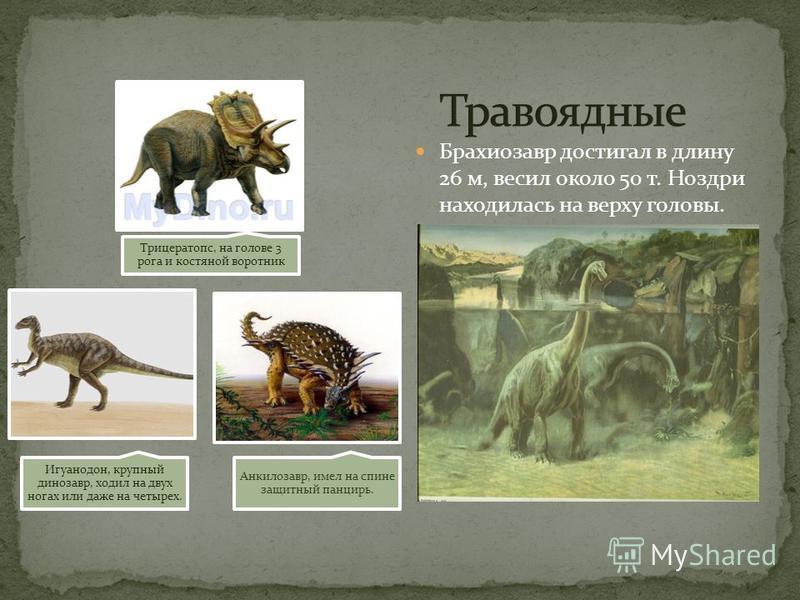 Трицератопс, на голове 3 рога и костяной воротник Игуанодон, крупный динозавр, ходил на двух ногах или даже на четырех. Анкилозавр, имел на спине защитный панцирь. Брахиозавр достигал в длину 26 м, весил около 50 т. Ноздри находилась на верху головы.