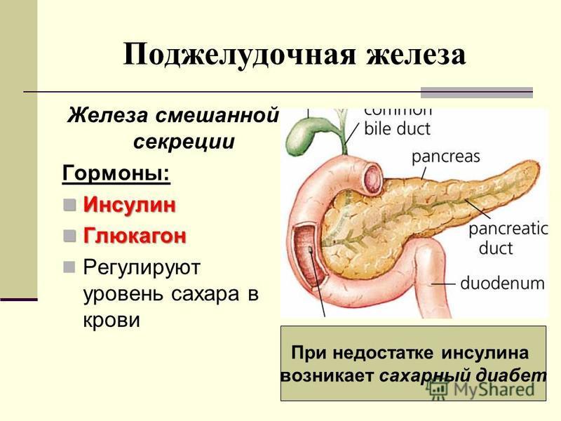 Поджелудочная железа Железа смешанной секреции Гормоны: Инсулин Инсулин Глюкагон Глюкагон Регулируют уровень сахара в крови При недостатке инсулина возникает сахарный диабет