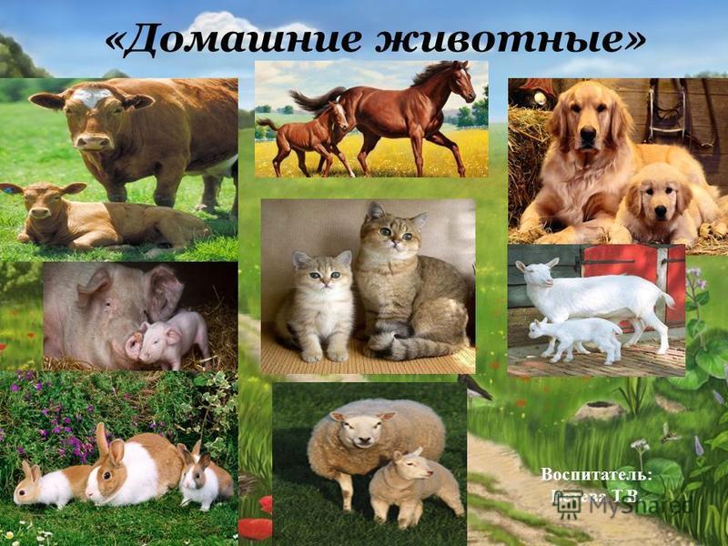 «Домашние животные» Воспитатель: Бетева Т.В.