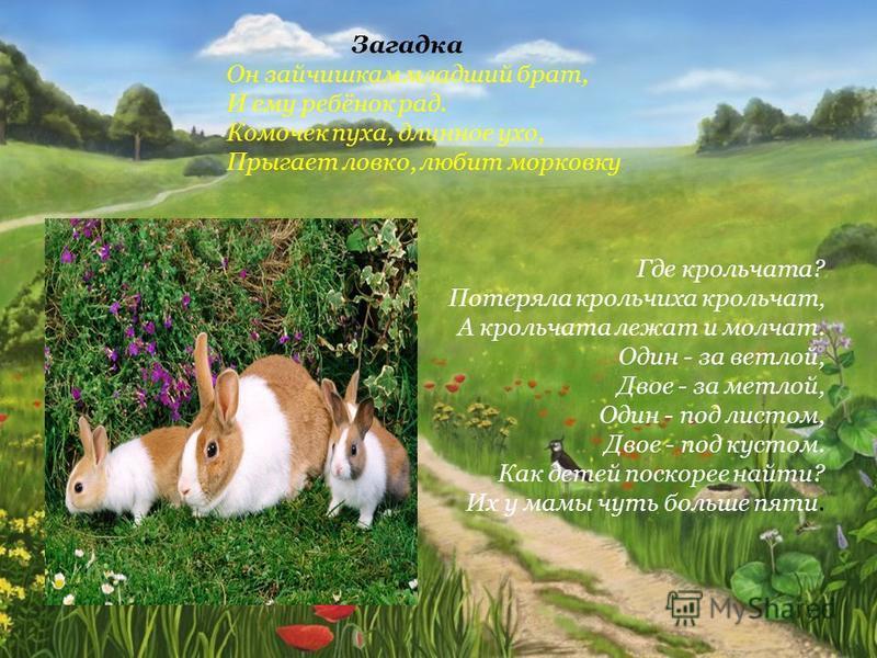Где крольчата? Потеряла крольчиха крольчат, А крольчата лежат и молчат. Один - за ветлой, Двое - за метлой, Один - под листом, Двое - под кустом. Как детей поскорее найти? Их у мамы чуть больше пяти. Загадка Он зайчишкам младший брат, И ему ребёнок р