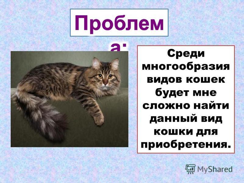 Среди многообразия видов кошек будет мне сложно найти данный вид кошки для приобретения.