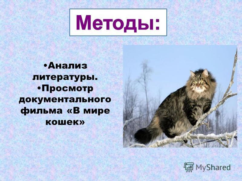 Анализ литературы. Просмотр документального фильма «В мире кошек»