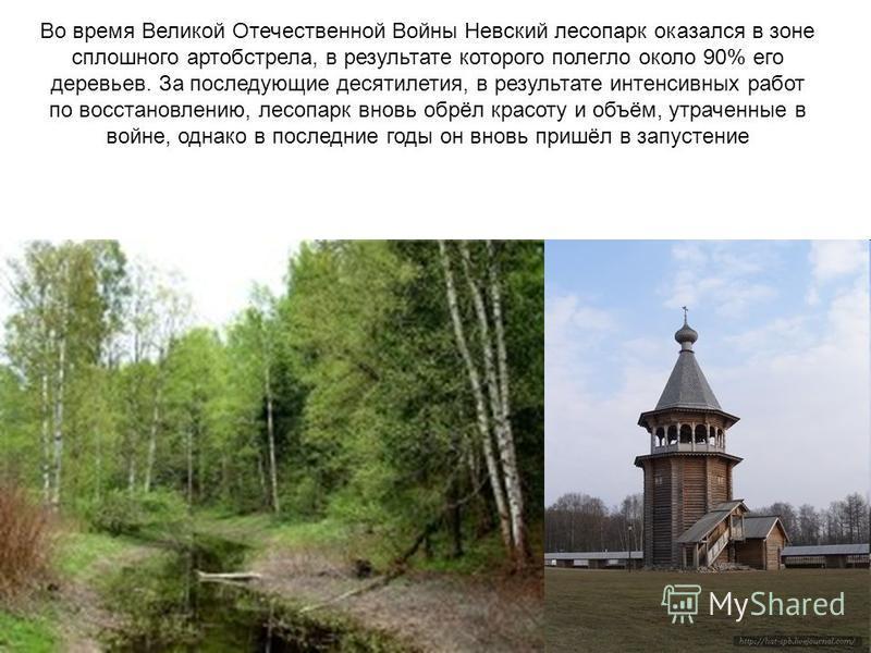 Во время Великой Отечественной Войны Невский лесопарк оказался в зоне сплошного артобстрела, в результате которого полегло около 90% его деревьев. За последующие десятилетия, в результате интенсивных работ по восстановлению, лесопарк вновь обрёл крас