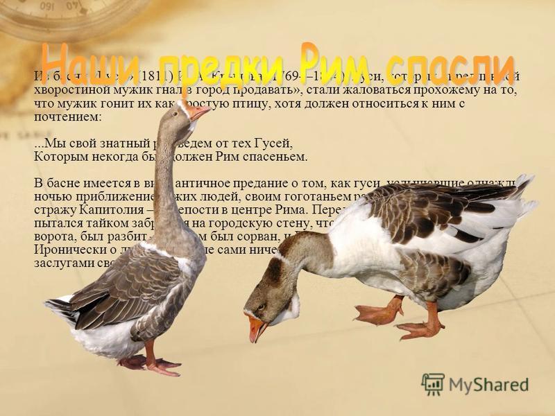 Из басни «Гуси» (1811) И. А. Крылова (17691844). Гуси, которых «предлинной хворостиной мужик гнал в город продавать», стали жаловаться прохожему на то, что мужик гонит их как простую птицу, хотя должен относиться к ним с почтением:...Мы свой знатный