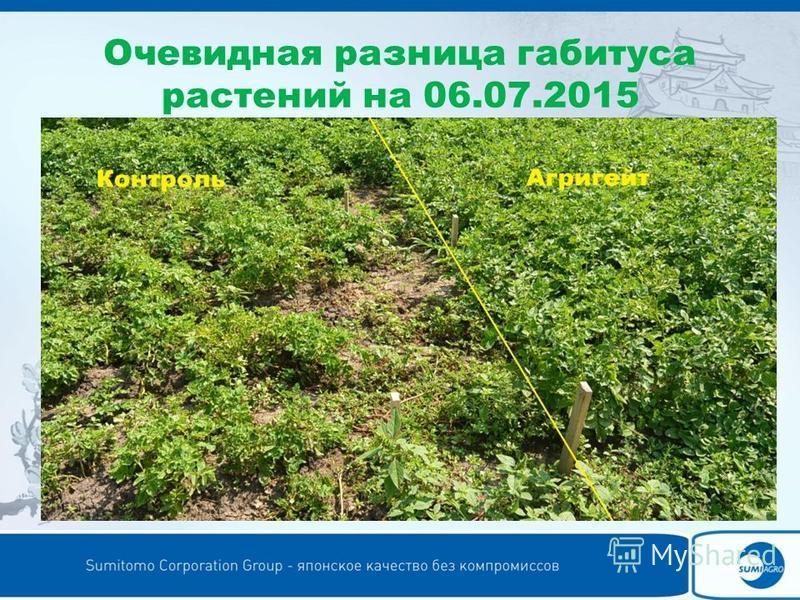 Очевидная разница габитуса растений на 06.07.2015
