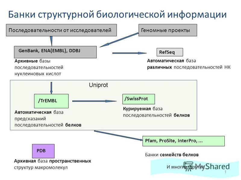 Pfam, ProSite, InterPro,... Банки структурной биологической информации GenBank, ENA(EMBL), DDBJ RefSeq Архивные базы последовательностей нуклеиновых кислот Автоматическая база различных последовательностей НК /SwissProt Курируемая база последовательн