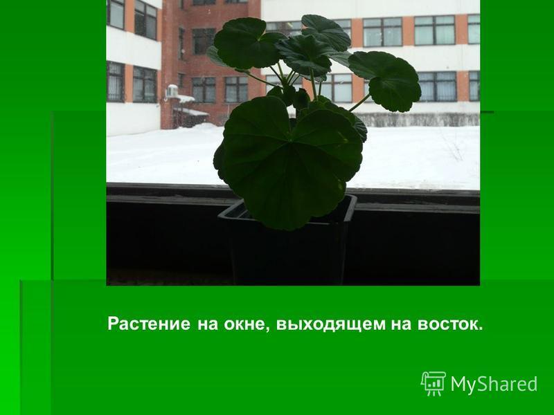 Растение на окне, выходящем на восток.