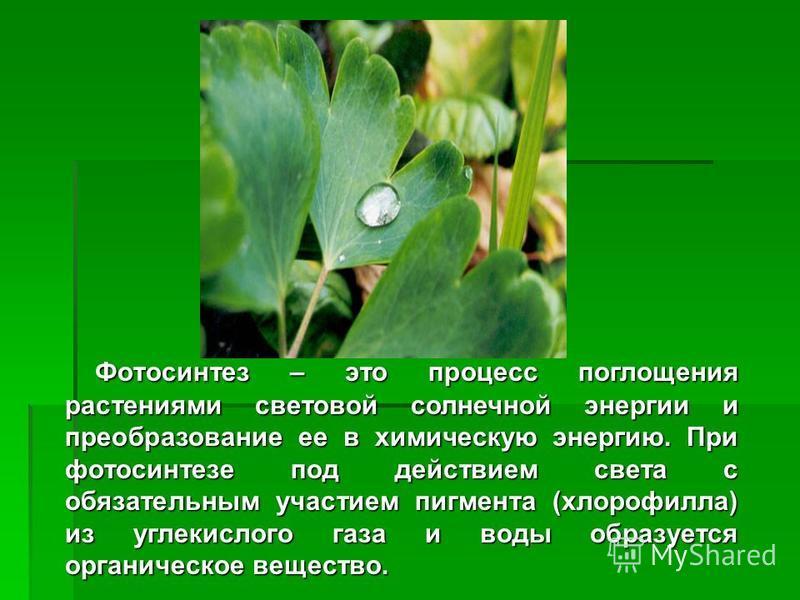 Фотосинтез – это процесс поглощения растениями световой солнечной энергии и преобразование ее в химическую энергию. При фотосинтезе под действием света с обязательным участием пигмента (хлорофилла) из углекислого газа и воды образуется органическое в