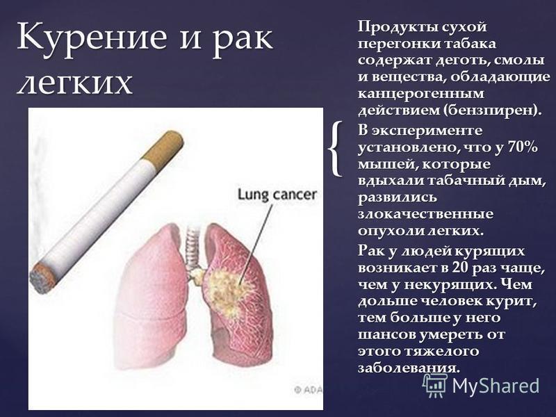 { Продукты сухой перегонки табака содержат деготь, смолы и вещества, обладающие канцерогенным действием (бензпирен). В эксперименте установлено, что у 70% мышей, которые вдыхали табачный дым, развились злокачественные опухоли легких. Рак у людей куря
