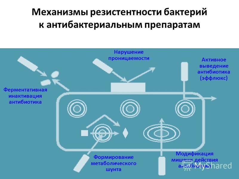 Механизмы резистентности бактерий к антибактериальным препаратам Ферментативная инактивация антибиотика Модификация мишени действия антибиотика Формирование метаболического шунта Нарушение проницаемости Активное выведение антибиотика (эффлюкс)