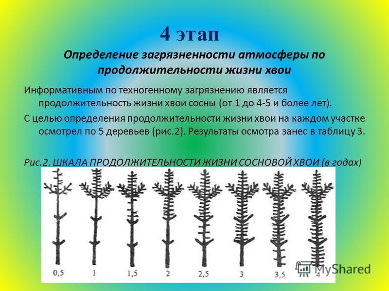4 этап Определение загрязненности атмосферы по продолжительности жизни хвои Информативным по техногенному загрязнению является продолжительность жизни хвои сосны (от 1 до 4-5 и более лет). С целью определения продолжительности жизни хвои на каждом уч