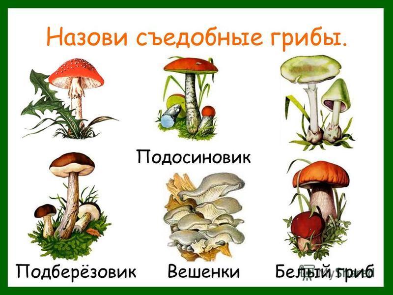 Назови съедобные грибы. Подосиновик Подберёзовик Вешенки Белый гриб