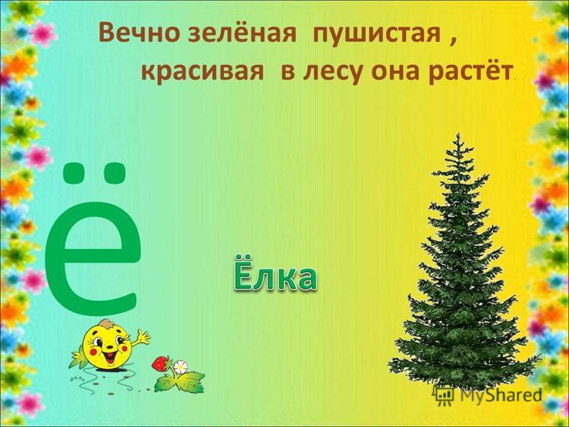 Вечно зелёная пушистая, красивая в лесу она растёт. ё