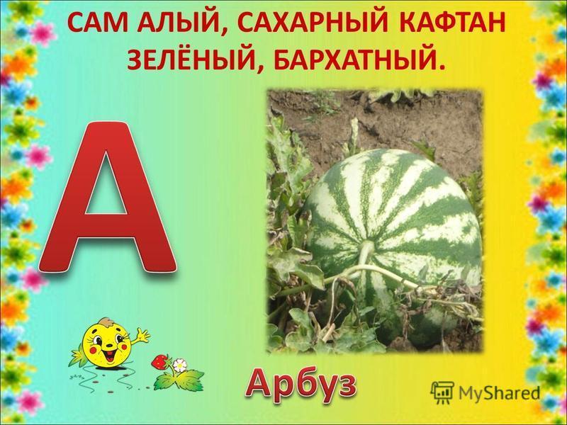 САМ АЛЫЙ, САХАРНЫЙ КАФТАН ЗЕЛЁНЫЙ, БАРХАТНЫЙ.