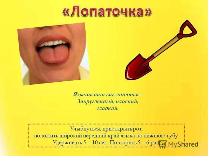 Улыбнуться, приоткрыть рот, положить широкий передний край языка на нижнюю губу. Удерживать 5 – 10 сек. Повторить 5 – 6 раз. Язычок наш как лопатка – Закругленный, плоский, гладкий.