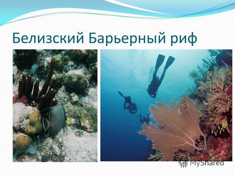 Белизский Барьерный риф