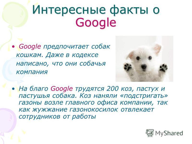 Интересные факты о Google Google предпочитает собак кошкам. Даже в кодексе написано, что они собачья компания На благо Google трудятся 200 коз, пастух и пастушья собака. Коз наняли «подстригать» газоны возле главного офиса компании, так как жужжание