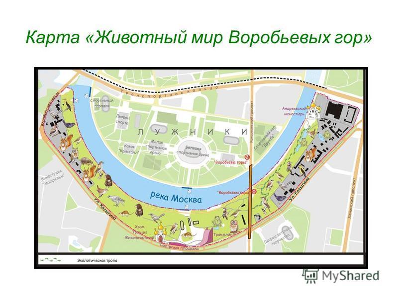 Карта «Животный мир Воробьевых гор»