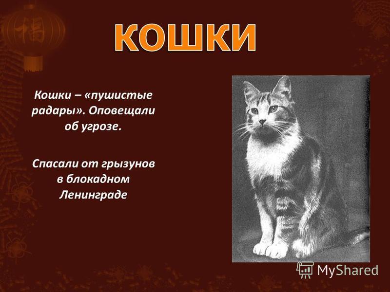 Кошки – «пушистые радары». Оповещали об угрозе. Спасали от грызунов в блокадном Ленинграде