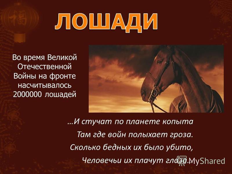 Во время Великой Отечественной Войны на фронте насчитывалось 2000000 лошадей …И стучат по планете копыта Там где войн полыхает гроза. Сколько бедных их было убито, Человечьи их плачут глаза…