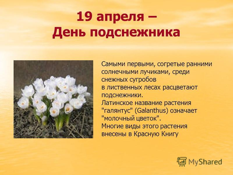 19 апреля – День подснежника Самыми первыми, согретые ранними солнечными лучиками, среди снежных сугробов в лиственных лесах расцветают подснежники. Латинское название растения