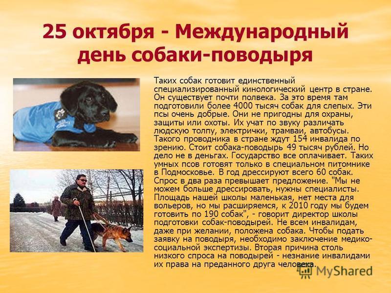 25 октября - Международный день собаки-поводыря Таких собак готовит единственный специализированный кинологический центр в стране. Он существует почти полвека. За это время там подготовили более 4000 тысяч собак для слепых. Эти псы очень добрые. Они