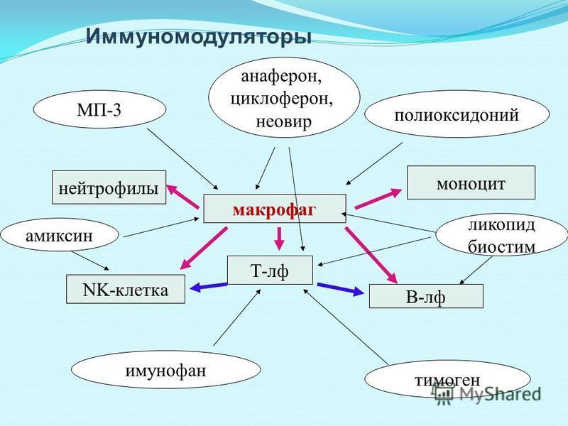 Иммуномодуляторы макрофаг Т-рф NK-клетка В-рф нейтрофилы моноцит ликопид биостим полиоксидоний МП-3 имунофан тимоген амиксин анаферон, циклоферон, неовир