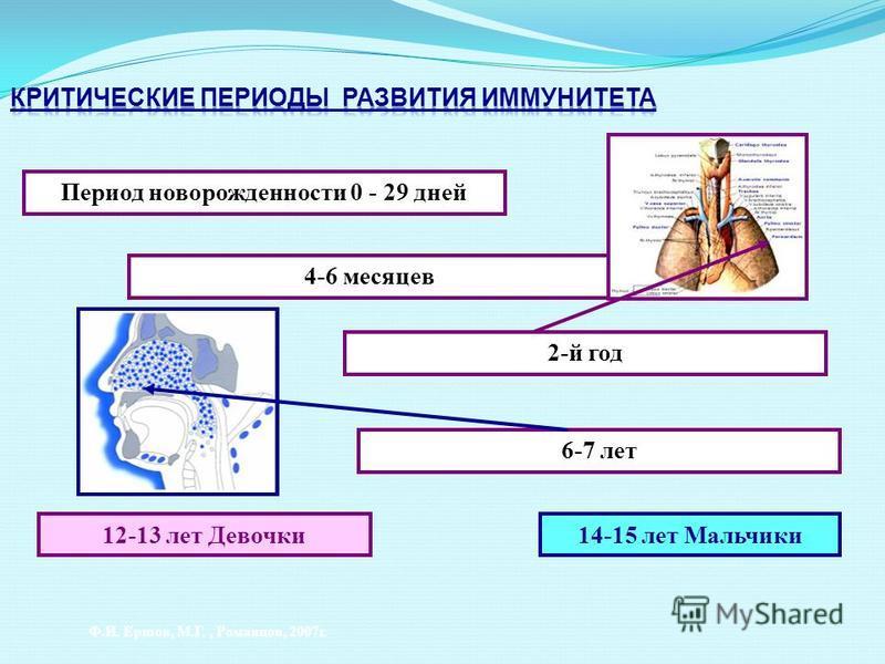 4-6 месяцев Период новорожденности 0 - 29 дней 2-й год 6-7 лет 12-13 лет Девочки 14-15 лет Мальчики Ф.И. Ершов, М.Г., Романцов, 2007 г.