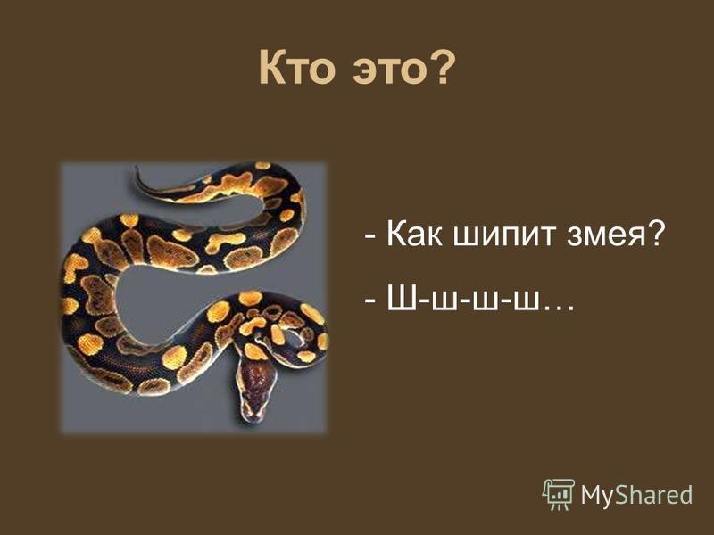 Кто это? - Как шипит змея? - Ш-ш-ш-ш…