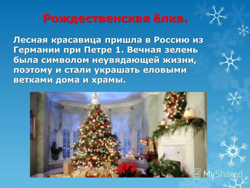 Рождественская ёлка. Лесная красавица пришла в Россию из Германии при Петре 1. Вечная зелень была символом неувядающей жизни, поэтому и стали украшать еловыми ветками дома и храмы.
