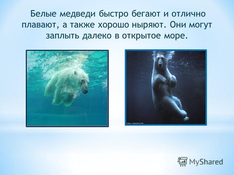 Белые медведи быстро бегают и отлично плавают, а также хорошо ныряют. Они могут заплыть далеко в открытое море.