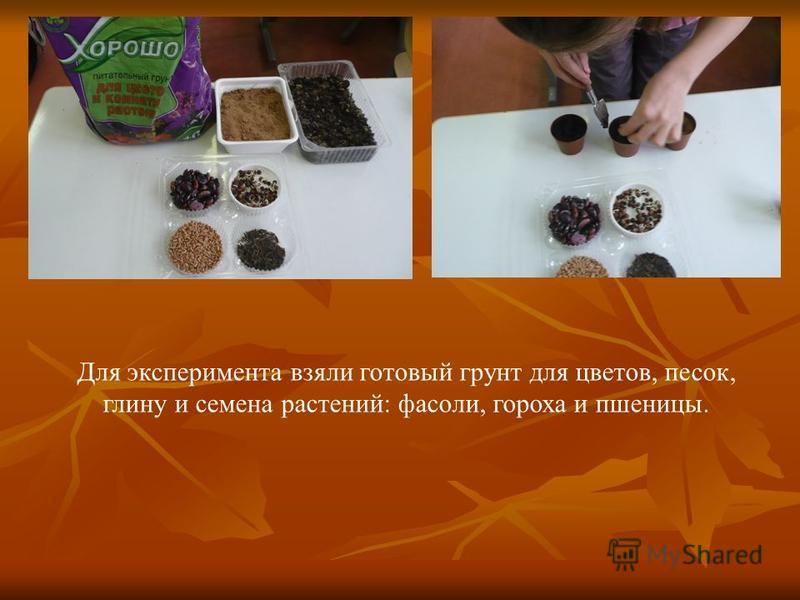 Для эксперимента взяли готовый грунт для цветов, песок, глину и семена растений: фасоли, гороха и пшеницы.