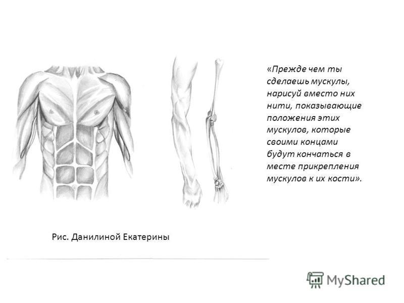 «Прежде чем ты сделаешь мускулы, нарисуй вместо них нити, показывающие положения этих мускулов, которые своими концами будут кончаться в месте прикрепления мускулов к их кости». Рис. Данилиной Екатерины