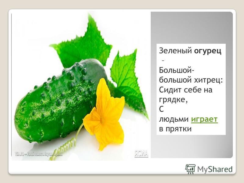 Зеленый огурец – Большой- большой хитрец: Сидит себе на грядке, С людьми играет в прятки играет