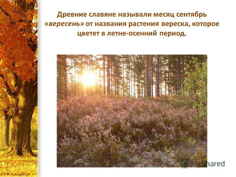 Древние славяне называли месяц сентябрь «вересень» от названия растения вереска, которое цветет в летне-осенний период.