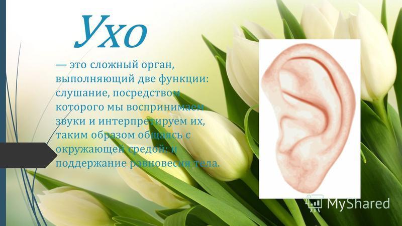 Ухо это сложный орган, выполняющий две функции: слушание, посредством которого мы воспринимаем звуки и интерпретируем их, таким образом общаясь с окружающей средой; и поддержание равновесия тела.