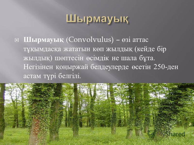Шырмауық (Convolvulus) – өзі аттас тұқымдасқа жататын көп жылдық ( кейде бір жылдық ) шөптесін өсімдік не шала бұта. Негізінен қоңыржай белдеулерде өсетін 250- ден астам түрі белгілі.