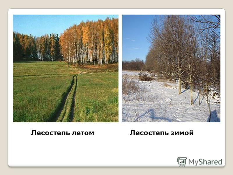 Лесостепь летом Лесостепь зимой