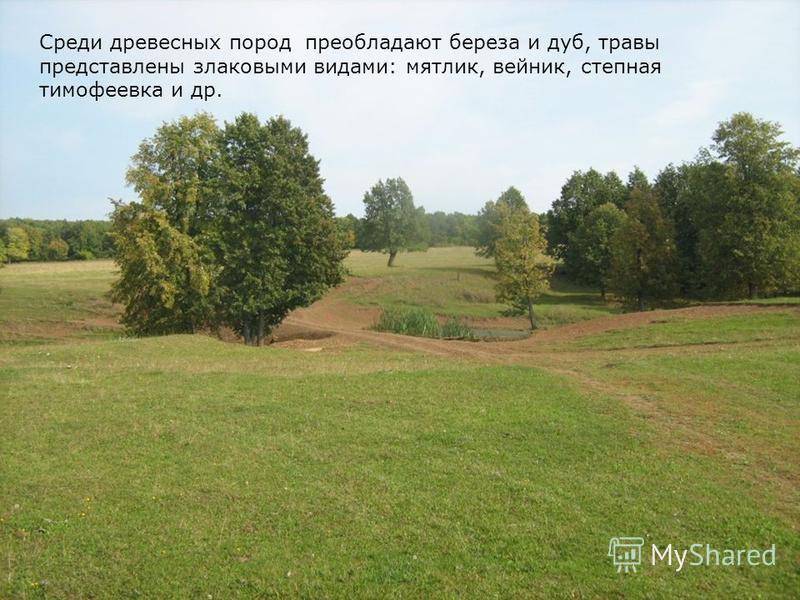 Среди древесных пород преобладают береза и дуб, травы представлены злаковыми видами: мятлик, вейник, степная тимофеевка и др.
