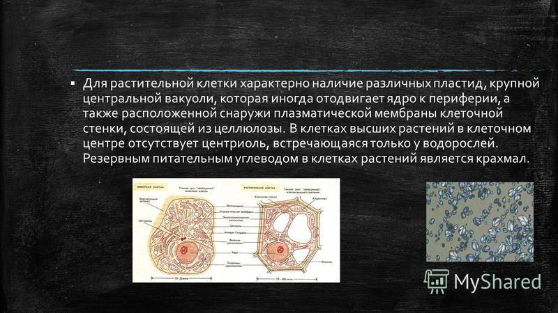 Для растительной клетки характерно наличие различных пластид, крупной центральной вакуоли, которая иногда отодвигает ядро к периферии, а также расположенной снаружи плазматической мембраны клеточной стенки, состоящей из целлюлозы. В клетках высших ра