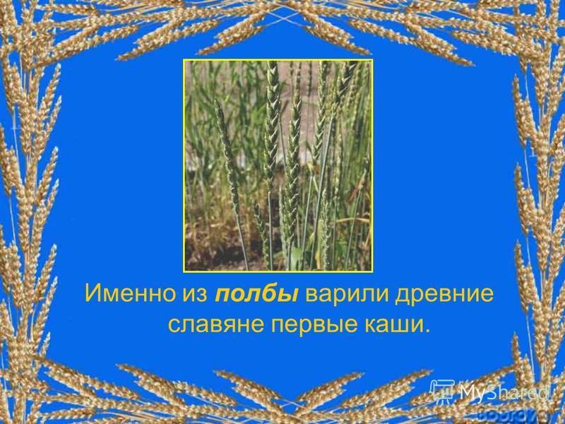 Именно из полбы варили древние славяне первые каши.