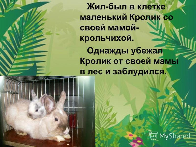 Жил-был в клетке маленький Кролик со своей мамой- крольчихой. Однажды убежал Кролик от своей мамы в лес и заблудился.