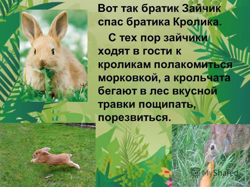 Вот так братик Зайчик спас братика Кролика. С тех пор зайчики ходят в гости к кроликам полакомиться морковкой, а крольчата бегают в лес вкусной травки пощипать, порезвиться.