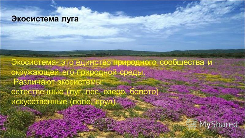 Экосистема луга Экосистема- это единство природного сообщества и окружающей его природной среды. Различают экосистемы: естественные (луг, лес, озеро, болото) искусственные (поле, пруд)