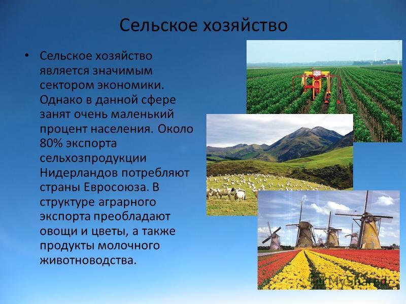 Сельское хозяйство Сельское хозяйство является значимым сектором экономики. Однако в данной сфере занят очень маленький процент населения. Около 80% экспорта сельхозпродукции Нидерландов потребляют страны Евросоюза. В структуре аграрного экспорта пре