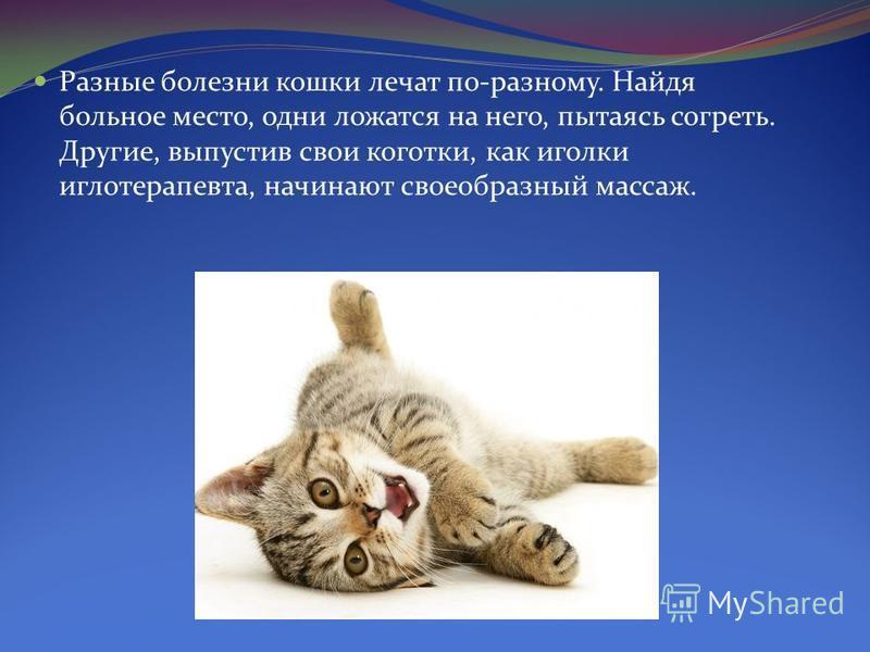 Разные болезни кошки лечат по-разному. Найдя больное место, одни ложатся на него, пытаясь согреть. Другие, выпустив свои коготки, как иголки иглотерапевта, начинают своеобразный массаж.