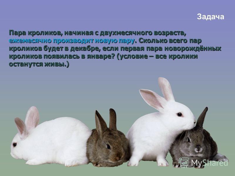 Пара кроликов, начиная с двухмесячного возраста, ежемесячно производит новую пару. Сколько всего пар кроликов будет в декабре, если первая пара новорождённых кроликов появилась в январе? (условие – все кролики останутся живы.) Задача